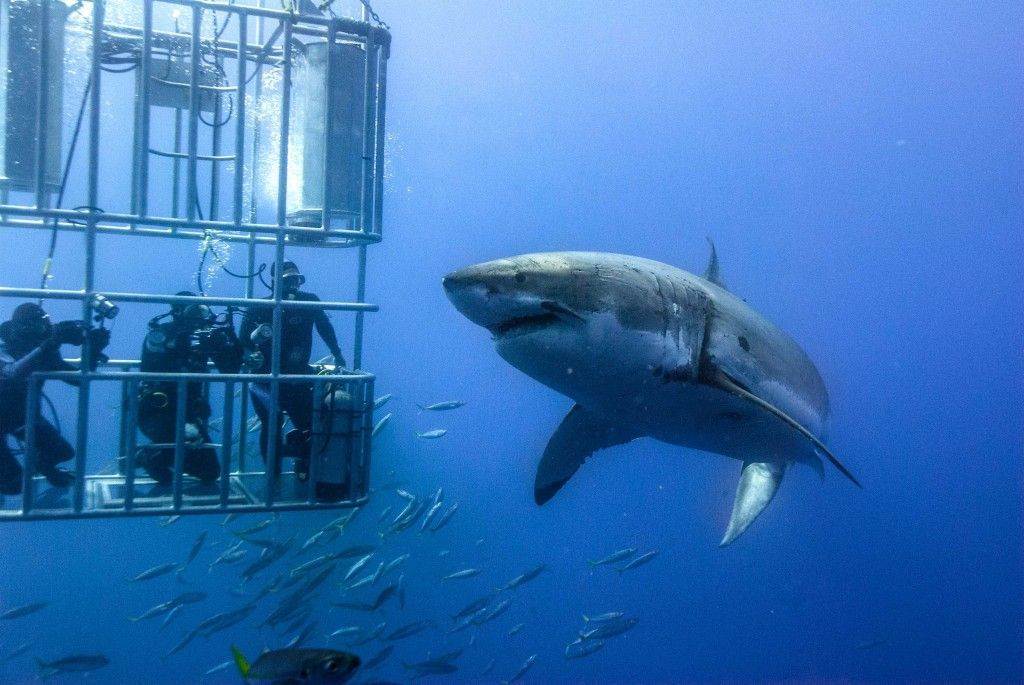 How to visit South Africa's marine Big 5 ethically