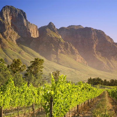 Picture of The Cape Winelands (+ Cape Town and the Overberg)