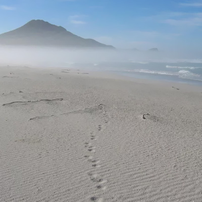 Picture of Guided Tour of the Cape Peninsula