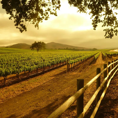 Picture of Guided Tour of the Cape Winelands
