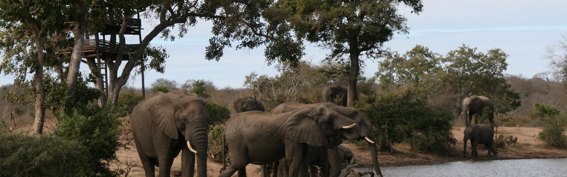 A beautiful picture of the Ethical Kruger Park Safari tour