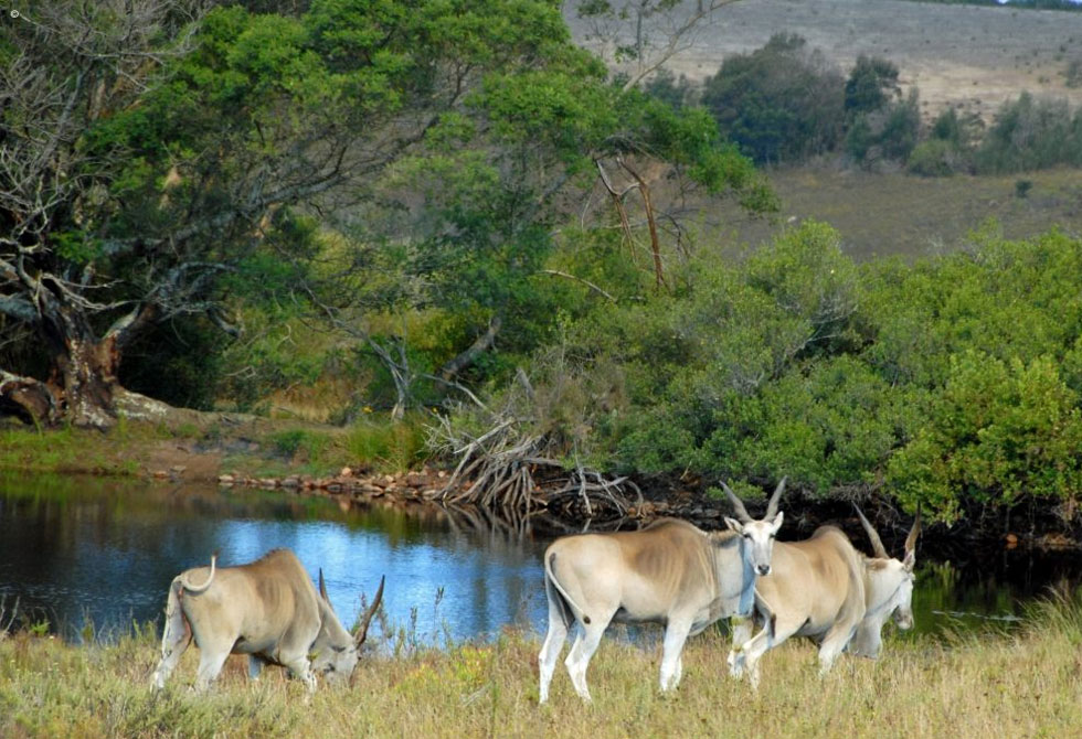 A beautiful picture of Gondwana Game Reserve