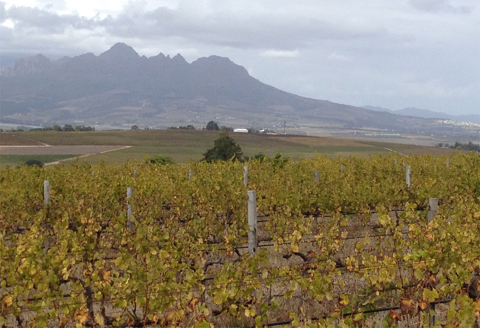 A beautiful picture of The Winelands through other eyes